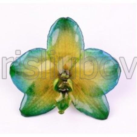 Брошка, Орхидея Фалаенопис