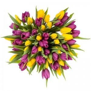 Букет от 51 жълти и лилави лалета