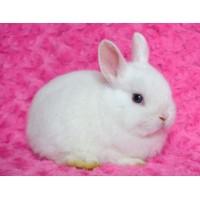Подари живо пухкаво зайче!