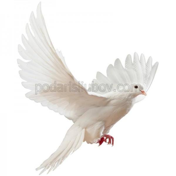 Сбъднете желание! Пуснете бял гълъб, символ на чистата любов!